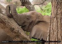 Weites Land - Safari in der Serengeti (Wandkalender 2019 DIN A4 quer) - Produktdetailbild 12