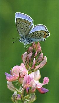 Welcher Schmetterling ist das? - Produktdetailbild 1