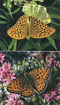 Welcher Schmetterling ist das? - Produktdetailbild 3