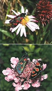 Welcher Schmetterling ist das? - Produktdetailbild 7
