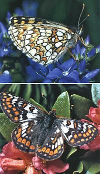 Welcher Schmetterling ist das? - Produktdetailbild 4