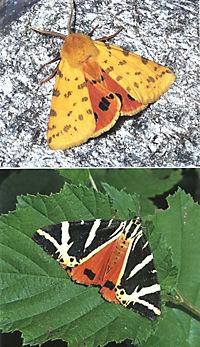 Welcher Schmetterling ist das? - Produktdetailbild 9