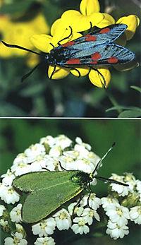 Welcher Schmetterling ist das? - Produktdetailbild 8