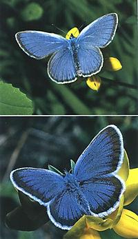 Welcher Schmetterling ist das? - Produktdetailbild 6