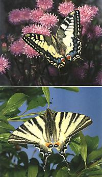 Welcher Schmetterling ist das? - Produktdetailbild 2