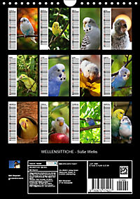 WELLENSITTICHE - Süße Wellis (Wandkalender 2019 DIN A4 hoch) - Produktdetailbild 13