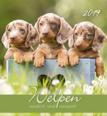 Welpen 2019 Postkartenkalender, ALPHA EDITION