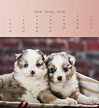 Welpen 2019 Postkartenkalender - Produktdetailbild 1