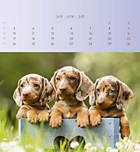 Welpen 2019 Postkartenkalender - Produktdetailbild 6
