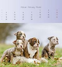 Welpen 2019 Postkartenkalender - Produktdetailbild 2