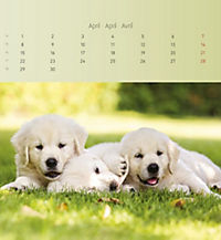 Welpen 2019 Postkartenkalender - Produktdetailbild 4