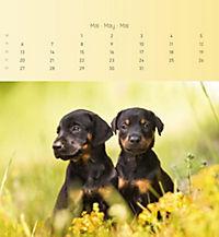 Welpen 2019 Postkartenkalender - Produktdetailbild 5