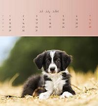 Welpen 2019 Postkartenkalender - Produktdetailbild 7
