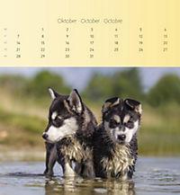 Welpen 2019 Postkartenkalender - Produktdetailbild 10