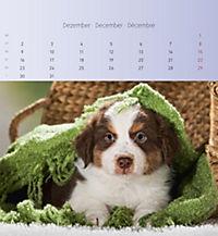 Welpen 2019 Postkartenkalender - Produktdetailbild 12