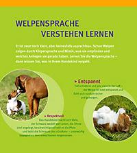 Welpen-Erziehung - Produktdetailbild 7