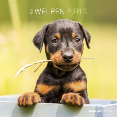 Welpen / Puppies 2019, ALPHA EDITION
