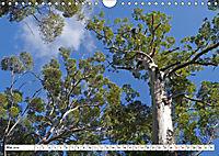 Westliches Australien - Landschaft und Natur (Wandkalender 2019 DIN A4 quer) - Produktdetailbild 5