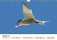 White Birds on the Wing (Wall Calendar 2019 DIN A4 Landscape) - Produktdetailbild 1