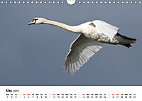 White Birds on the Wing (Wall Calendar 2019 DIN A4 Landscape) - Produktdetailbild 5