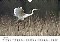 White Birds on the Wing (Wall Calendar 2019 DIN A4 Landscape) - Produktdetailbild 7