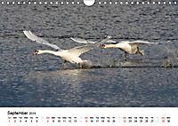 White Birds on the Wing (Wall Calendar 2019 DIN A4 Landscape) - Produktdetailbild 9