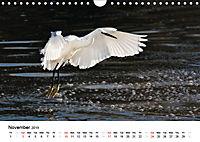 White Birds on the Wing (Wall Calendar 2019 DIN A4 Landscape) - Produktdetailbild 11