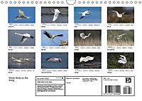 White Birds on the Wing (Wall Calendar 2019 DIN A4 Landscape) - Produktdetailbild 13