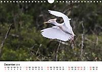 White Birds on the Wing (Wall Calendar 2019 DIN A4 Landscape) - Produktdetailbild 12