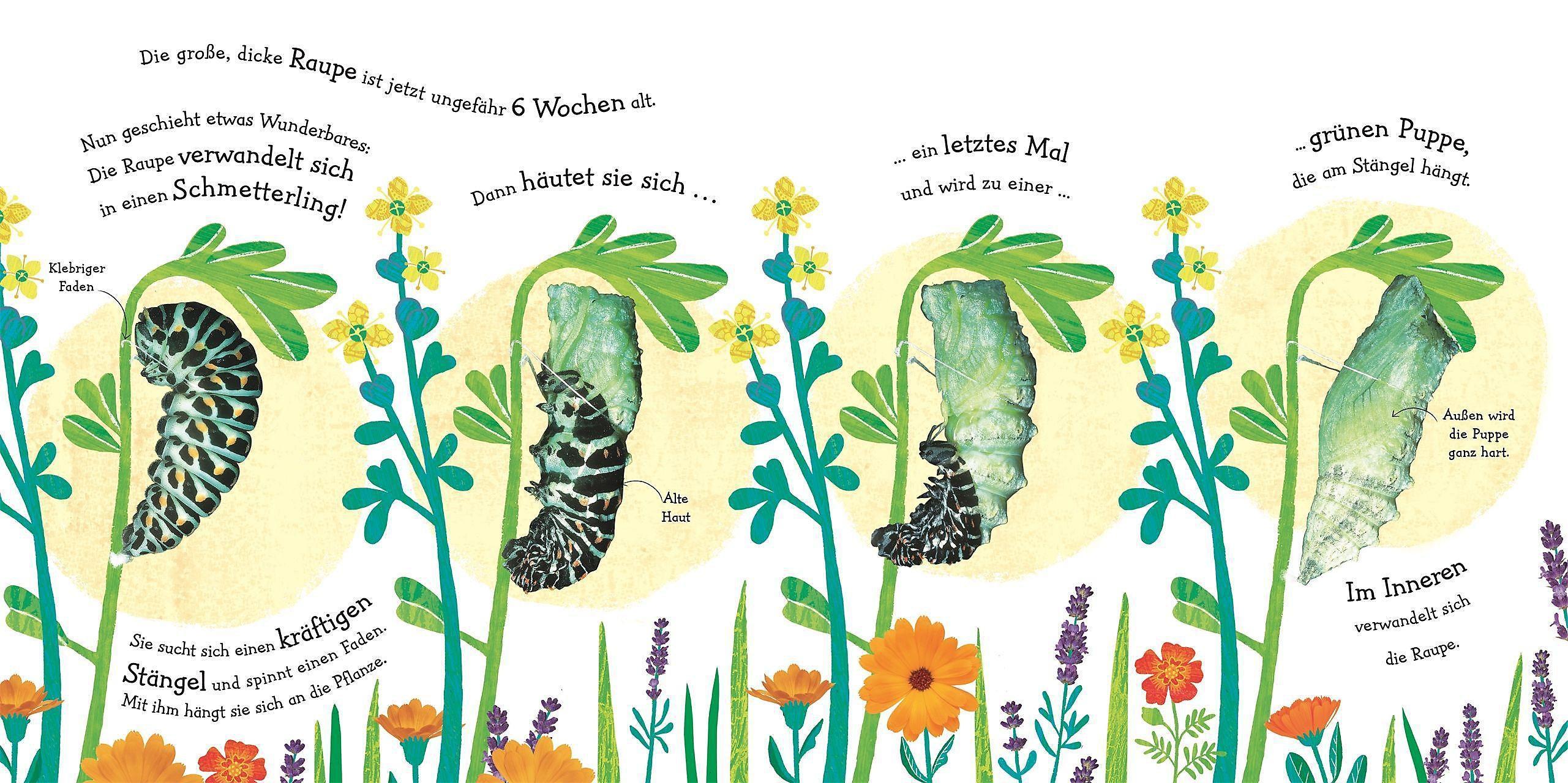 Wie Wird Die Raupe Zum Schmetterling Buch Versandkostenfrei