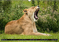Wild animals from around the world (Wall Calendar 2019 DIN A3 Landscape) - Produktdetailbild 1
