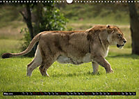 Wild animals from around the world (Wall Calendar 2019 DIN A3 Landscape) - Produktdetailbild 5