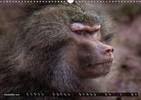 Wild animals from around the world (Wall Calendar 2019 DIN A3 Landscape) - Produktdetailbild 12