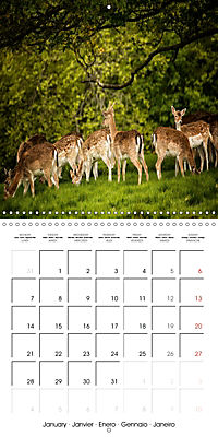 Wild Deer In Nature (Wall Calendar 2019 300 × 300 mm Square) - Produktdetailbild 1