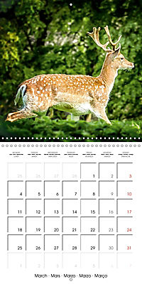 Wild Deer In Nature (Wall Calendar 2019 300 × 300 mm Square) - Produktdetailbild 3