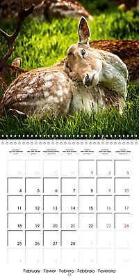 Wild Deer In Nature (Wall Calendar 2019 300 × 300 mm Square) - Produktdetailbild 2