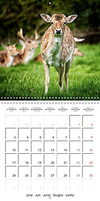 Wild Deer In Nature (Wall Calendar 2019 300 × 300 mm Square) - Produktdetailbild 6