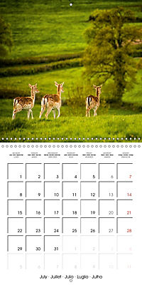 Wild Deer In Nature (Wall Calendar 2019 300 × 300 mm Square) - Produktdetailbild 7