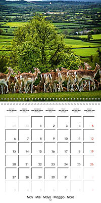 Wild Deer In Nature (Wall Calendar 2019 300 × 300 mm Square) - Produktdetailbild 5