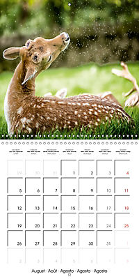 Wild Deer In Nature (Wall Calendar 2019 300 × 300 mm Square) - Produktdetailbild 8