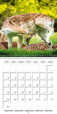 Wild Deer In Nature (Wall Calendar 2019 300 × 300 mm Square) - Produktdetailbild 9