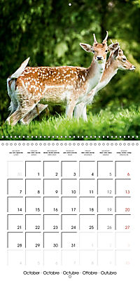 Wild Deer In Nature (Wall Calendar 2019 300 × 300 mm Square) - Produktdetailbild 10