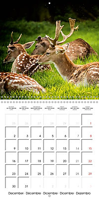 Wild Deer In Nature (Wall Calendar 2019 300 × 300 mm Square) - Produktdetailbild 12