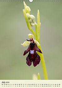 Wild European Orchids (Wall Calendar 2019 DIN A3 Portrait) - Produktdetailbild 7