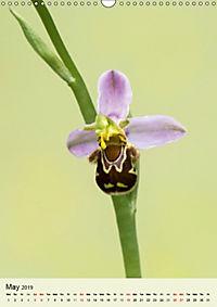 Wild European Orchids (Wall Calendar 2019 DIN A3 Portrait) - Produktdetailbild 5