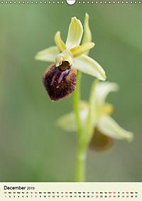 Wild European Orchids (Wall Calendar 2019 DIN A3 Portrait) - Produktdetailbild 12