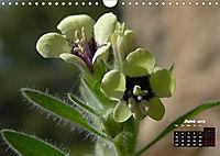 Wild Flowers of the World (Wall Calendar 2019 DIN A4 Landscape) - Produktdetailbild 6