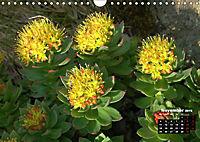 Wild Flowers of the World (Wall Calendar 2019 DIN A4 Landscape) - Produktdetailbild 11