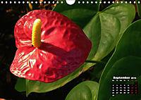Wild Flowers of the World (Wall Calendar 2019 DIN A4 Landscape) - Produktdetailbild 9
