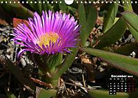 Wild Flowers of the World (Wall Calendar 2019 DIN A4 Landscape) - Produktdetailbild 12